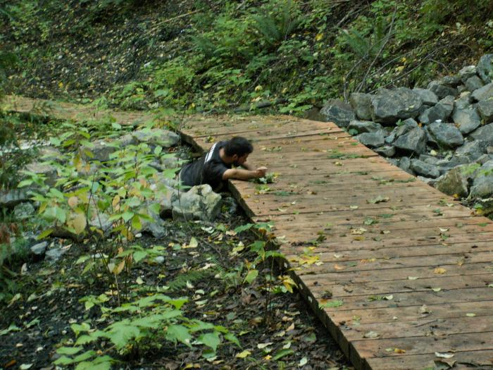 training outdoors Sat 10 11 08 rock massage while rolling about off and on the foot bridge. Staying low
