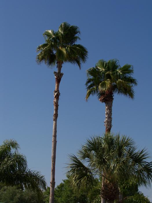 Two Palms 100 1057